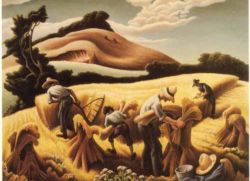 harvestingwheat