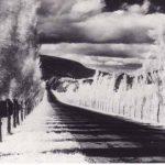 roadandpoplartrees