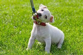 Dog on a short leash